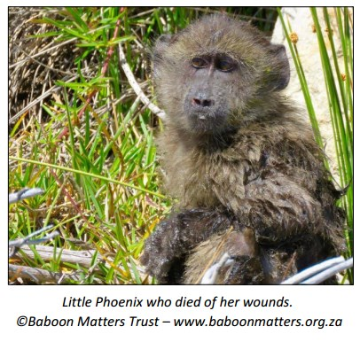 Where is the Welfare in South African Conservation Policy?