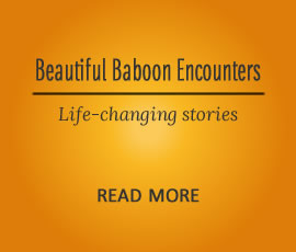Beautiful encounters with Baboons - Life-changing stories