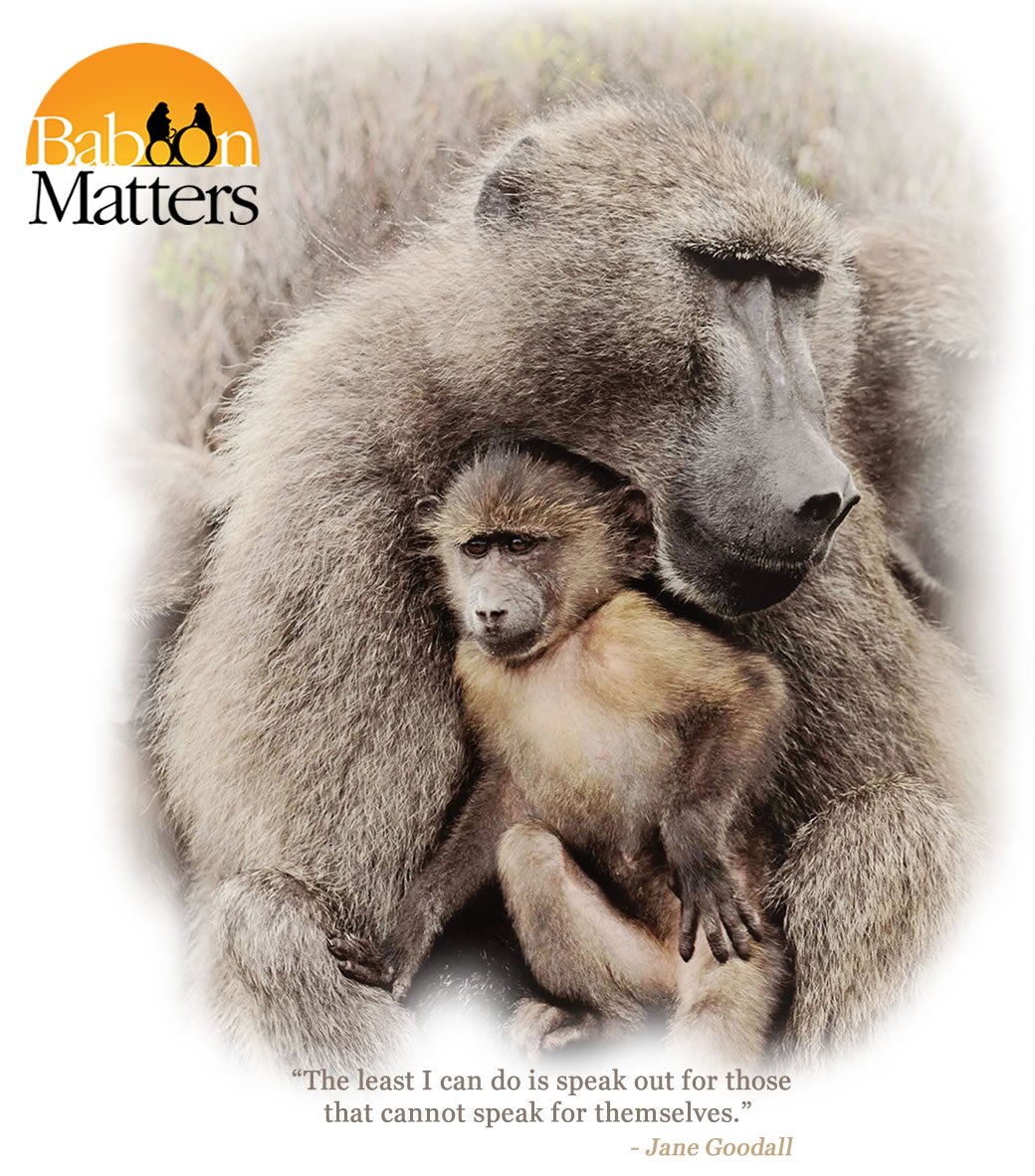 Baboon Matters Trust - baboon conservation in South Africa