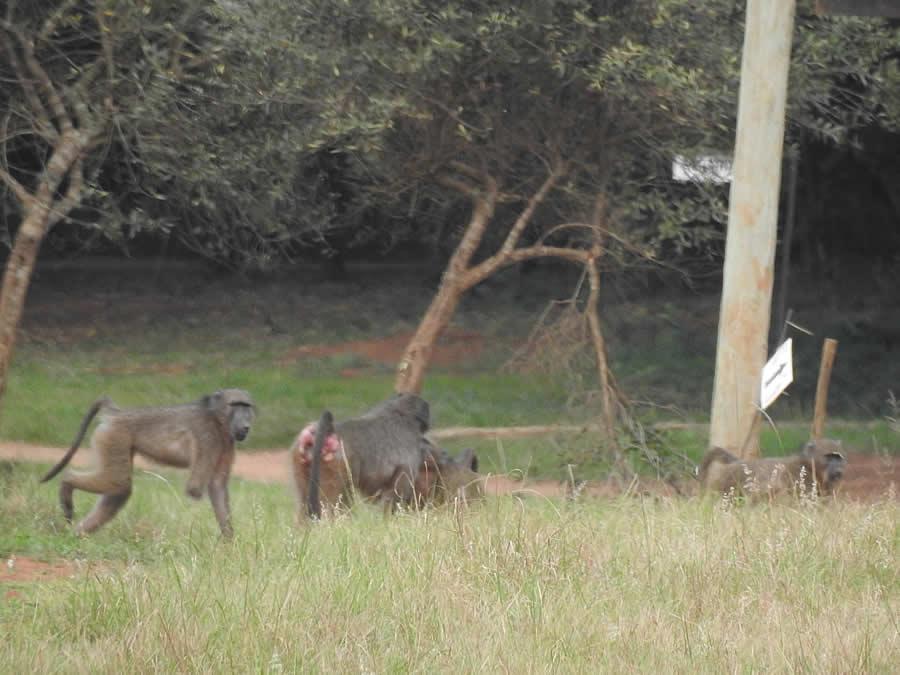 Kruger National Park - missing front right hand